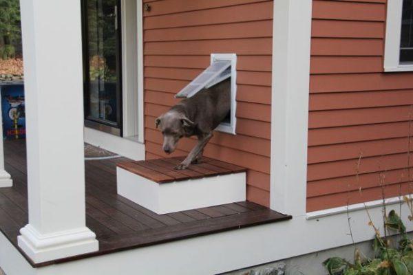 dog door exterior