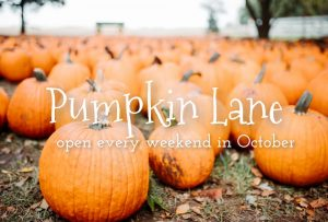 "Picture of pumpkins in a pumpkin patch, with the words ""Pumpkin Lane, open every weekend in October"""