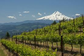 Mt Hood and Wineries